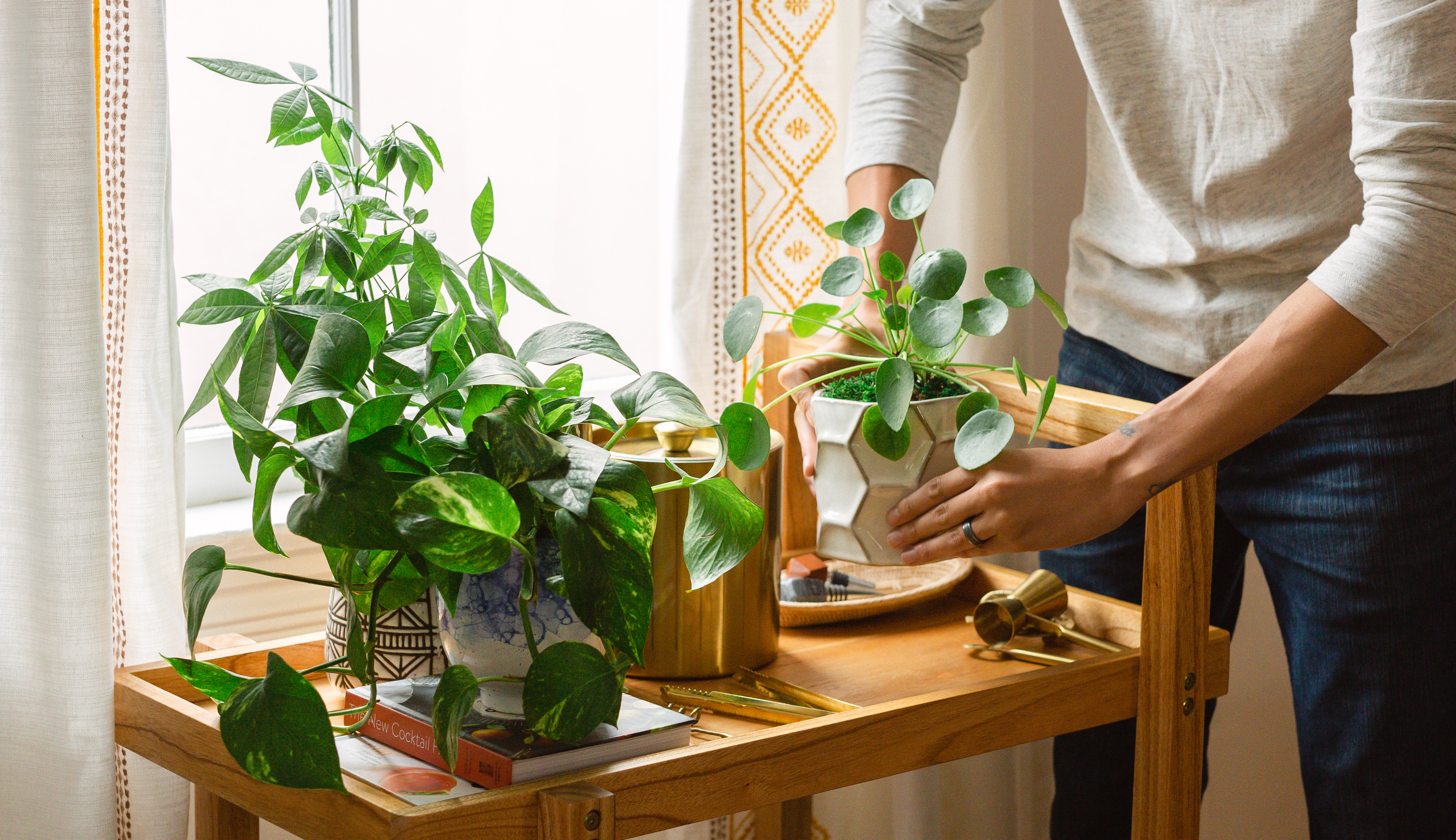 Cart full of various indoor plants. Hands putting pilea plant down next to pothos plant.