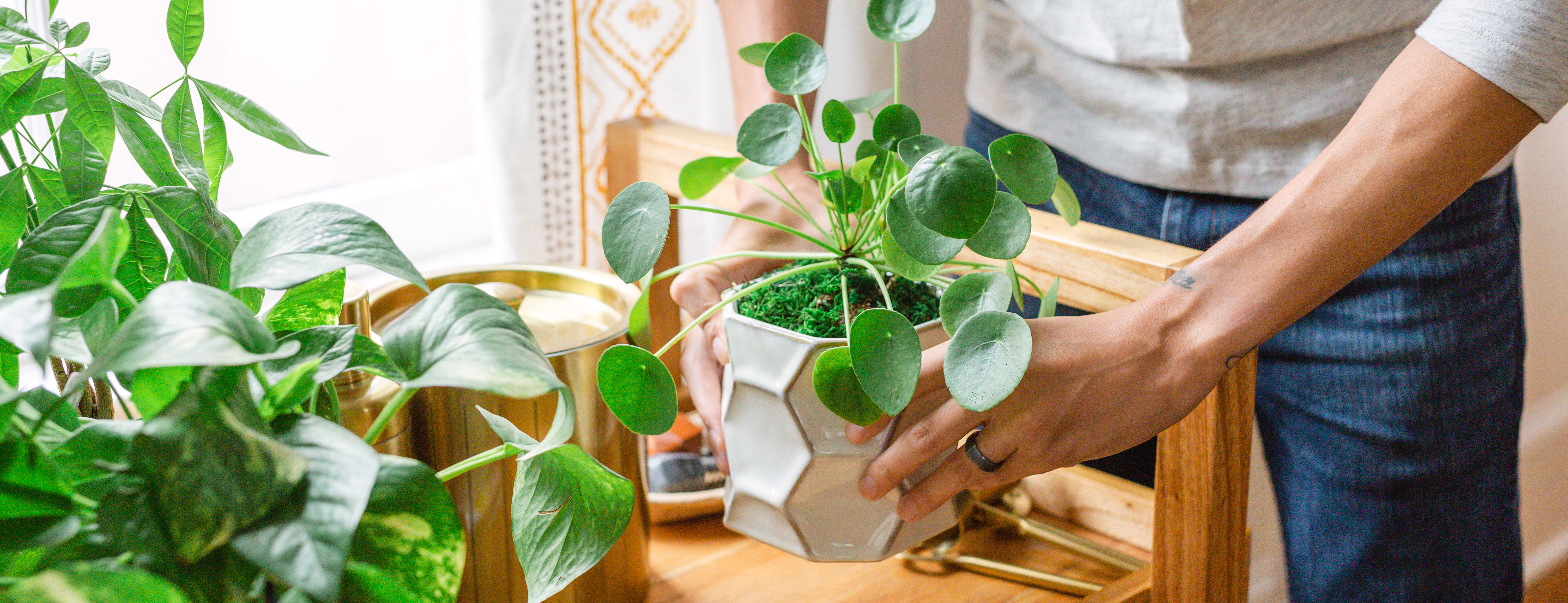 Hands and various indoor plants including a pothos plant and a pilea plant