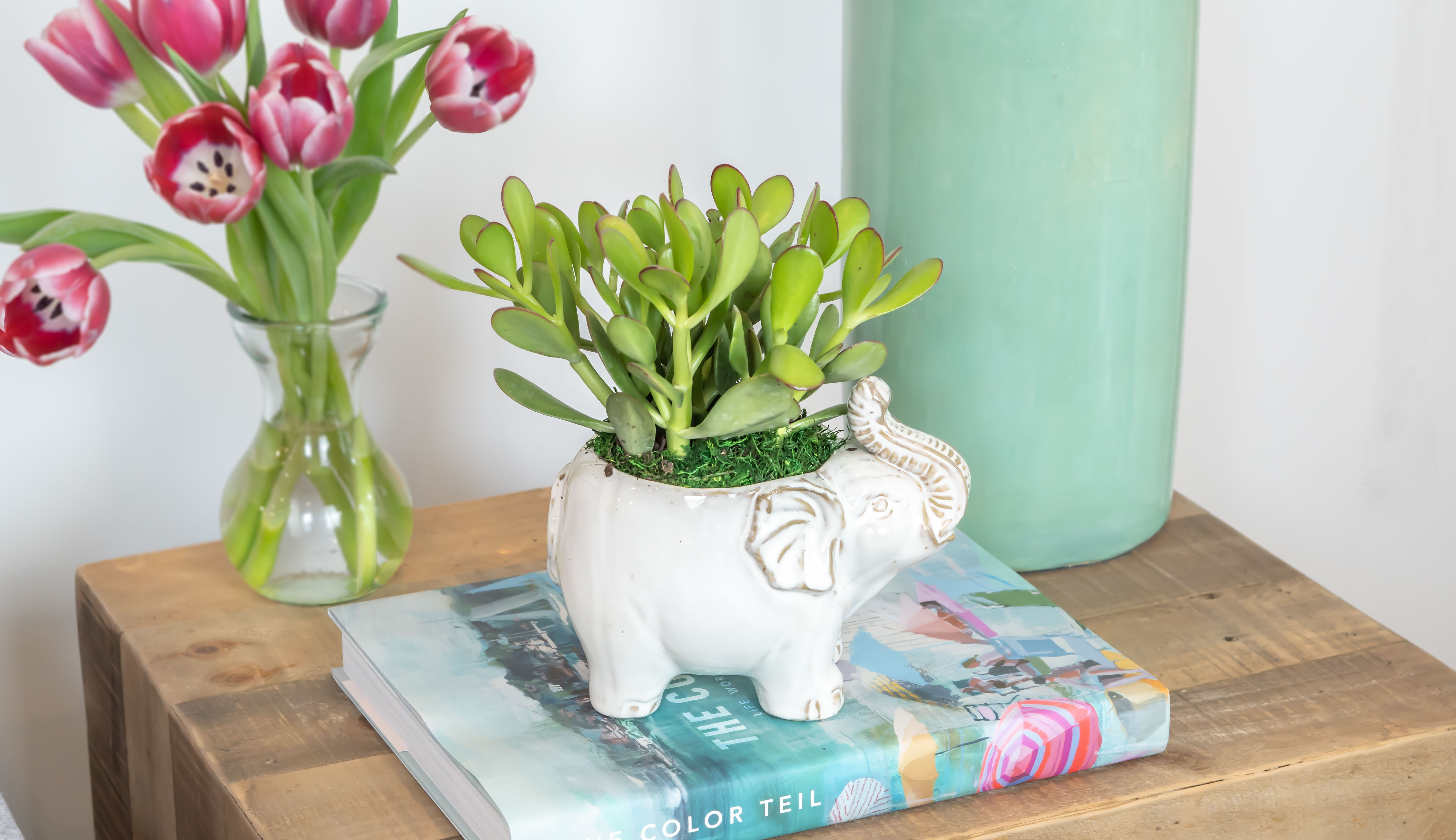 Jade succulent in white planter shaped like an elephant