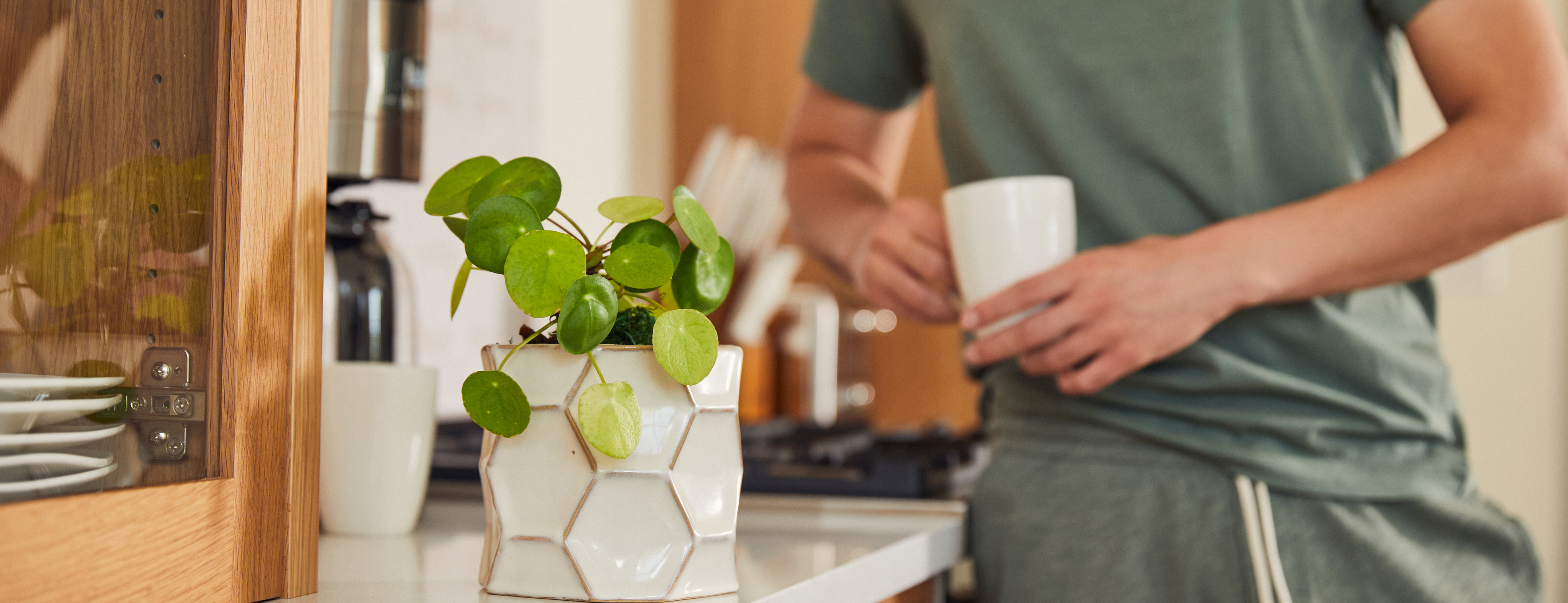 Man leaning on counter with Chinese money plant