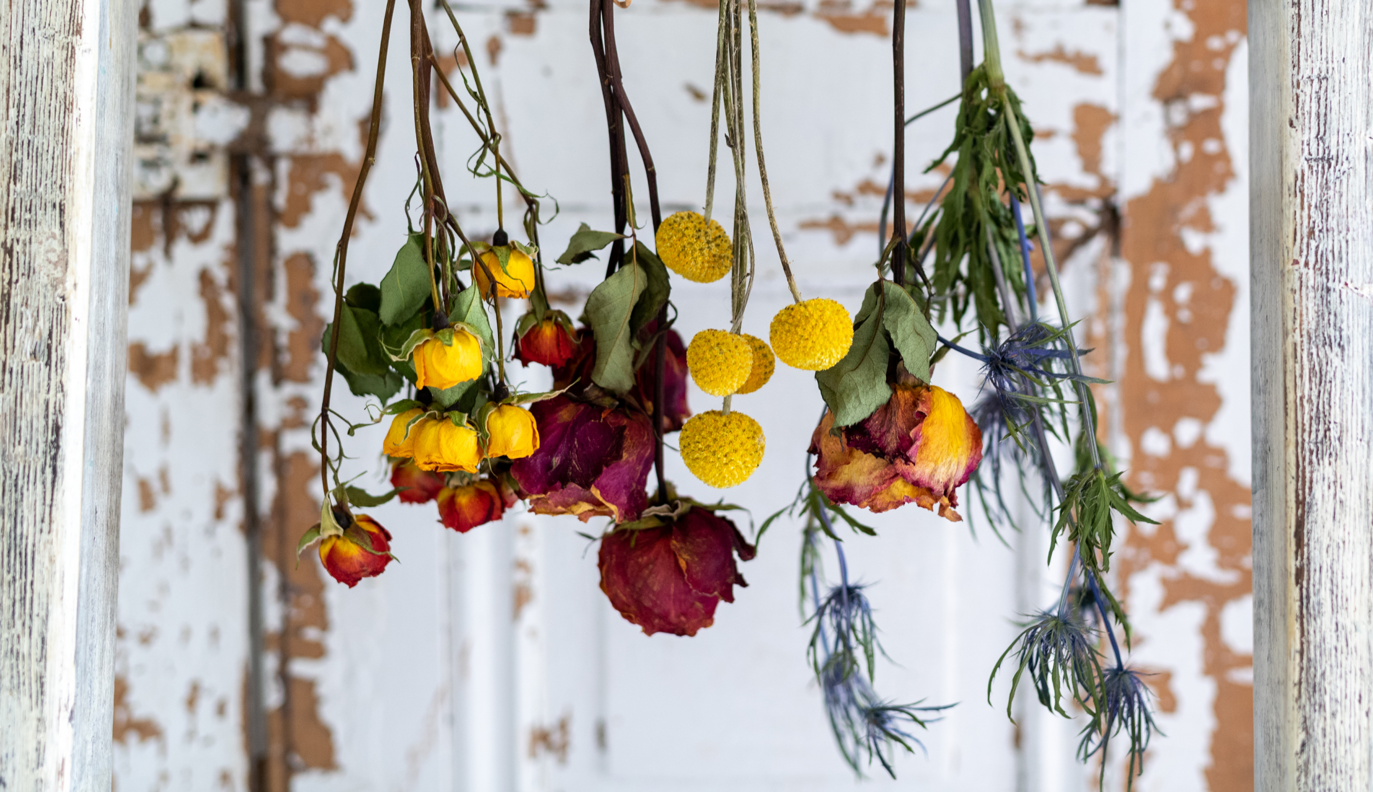 Dried flowers displayed for wall decor