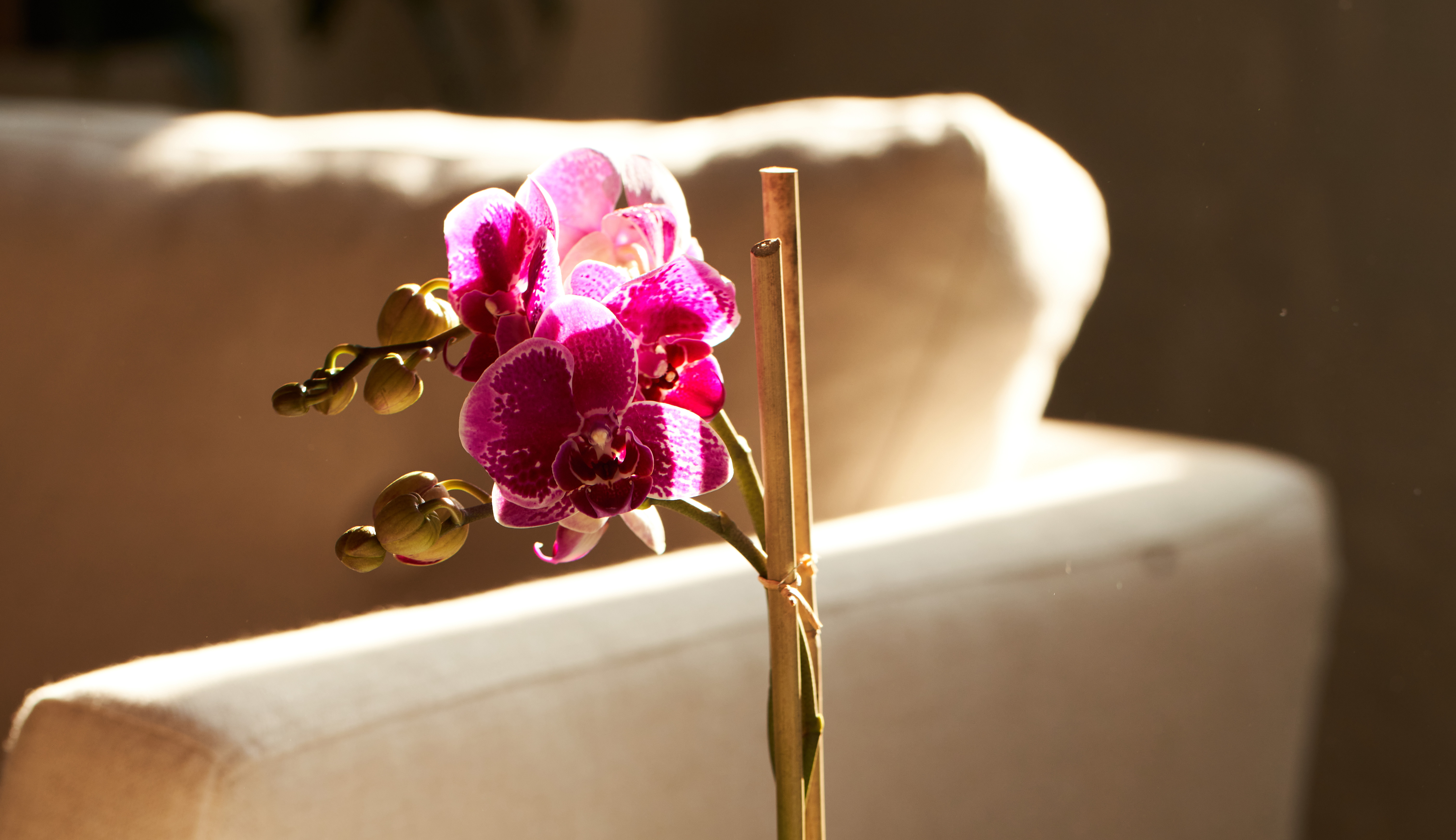 Close up image of a purple orchid plant.