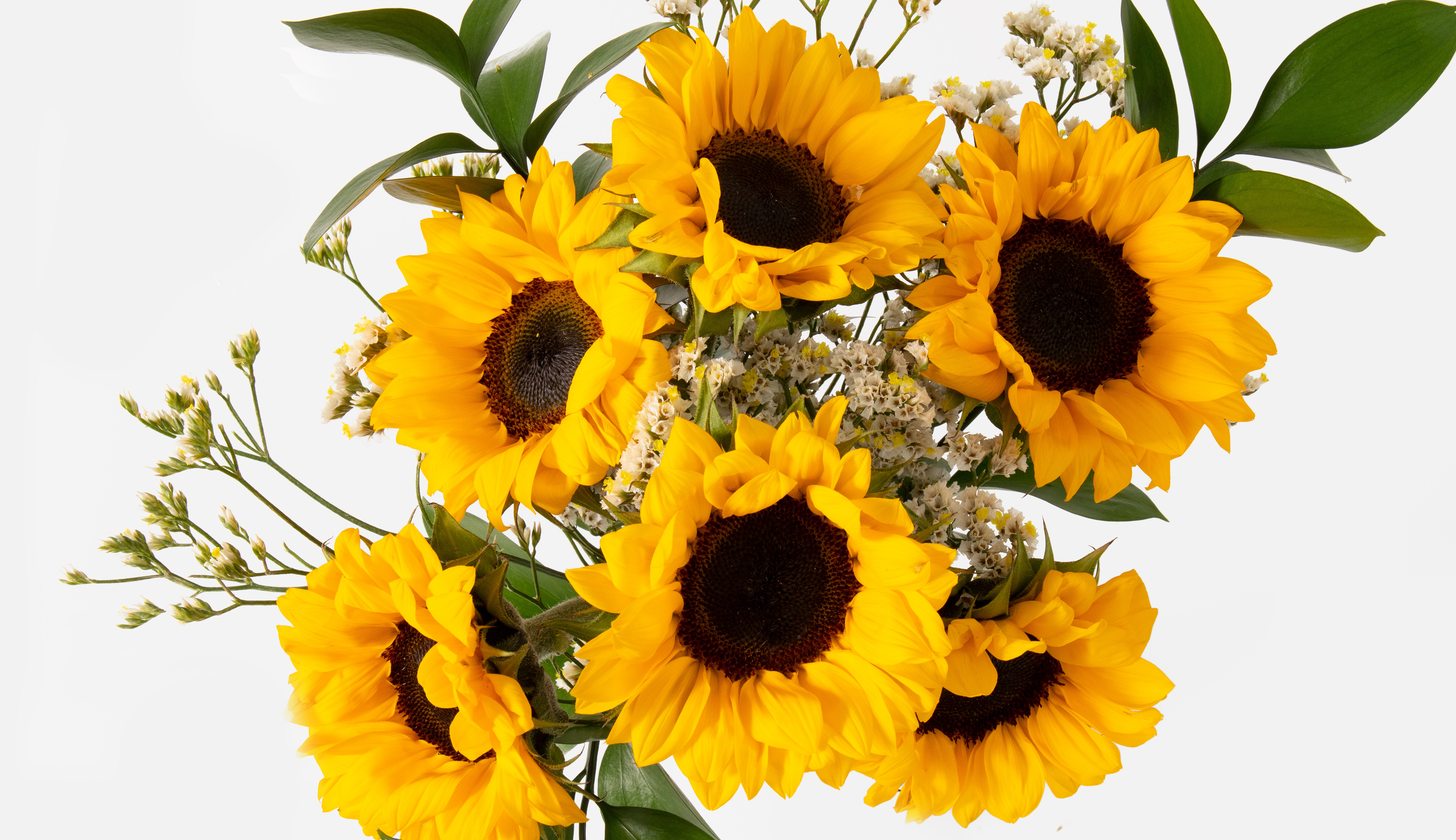 Top down view of sunflower bouquet.
