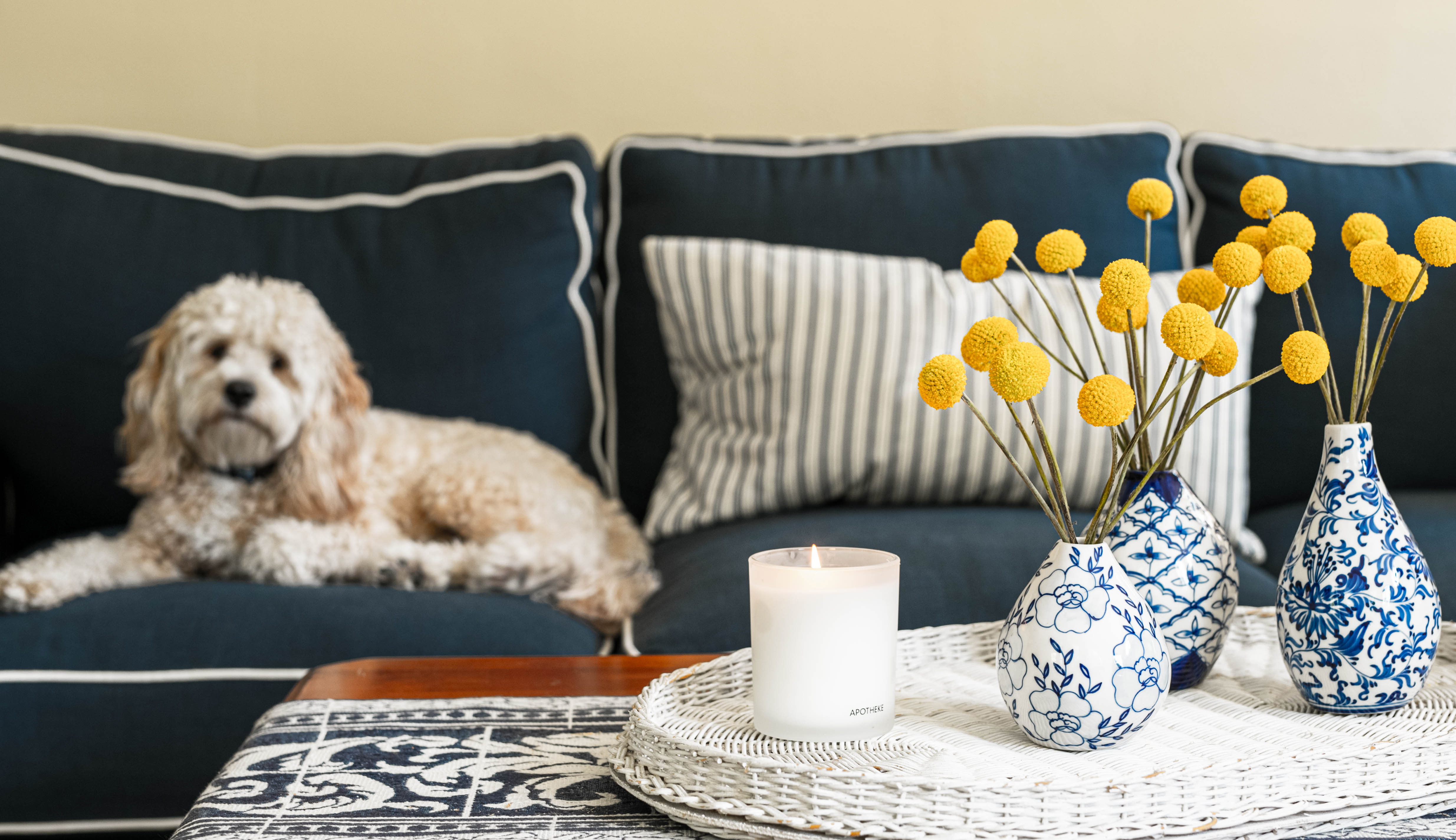 Dog sitting on a couch behind vases of dried flowers