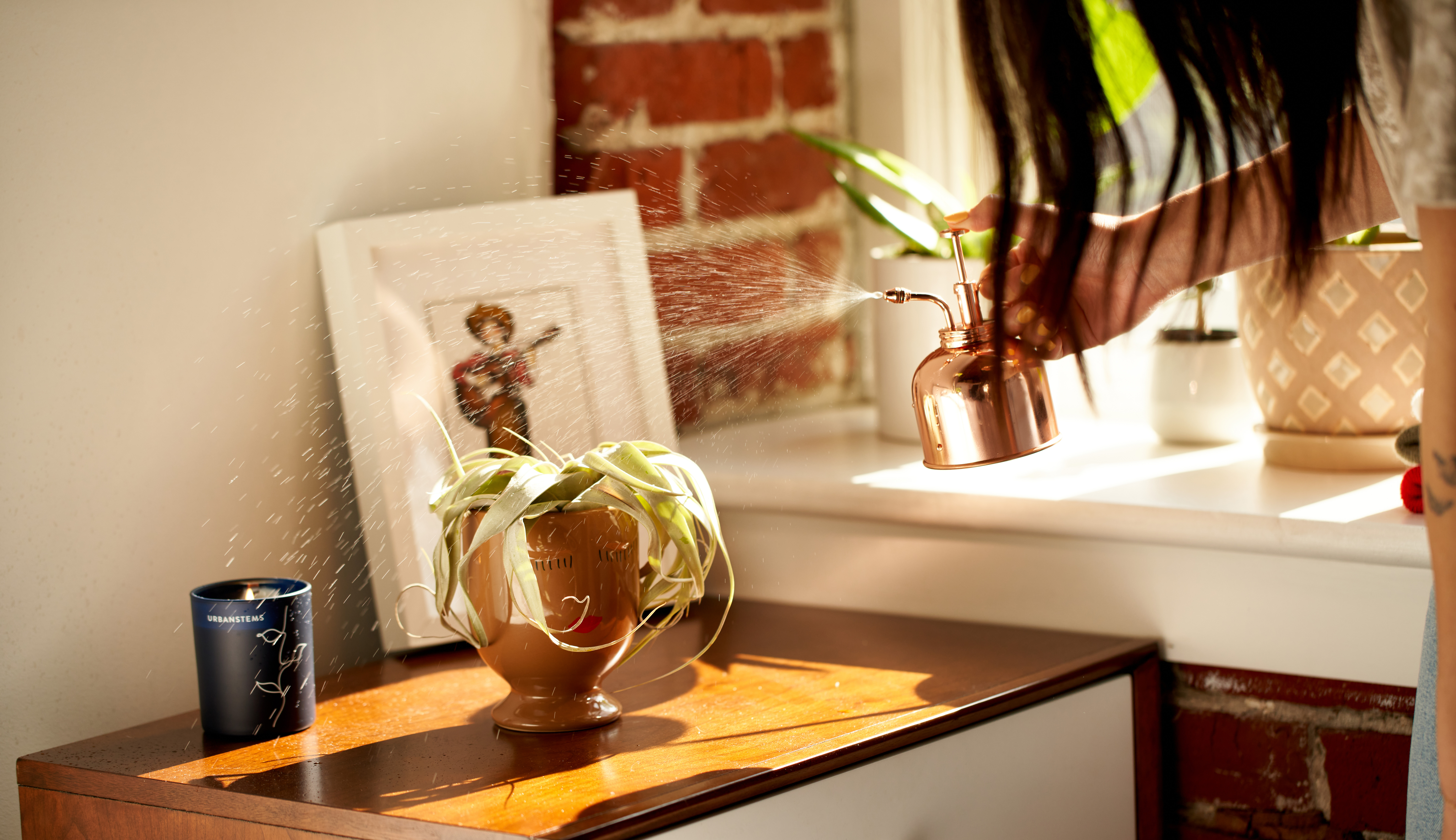 Hand misting air plant with water