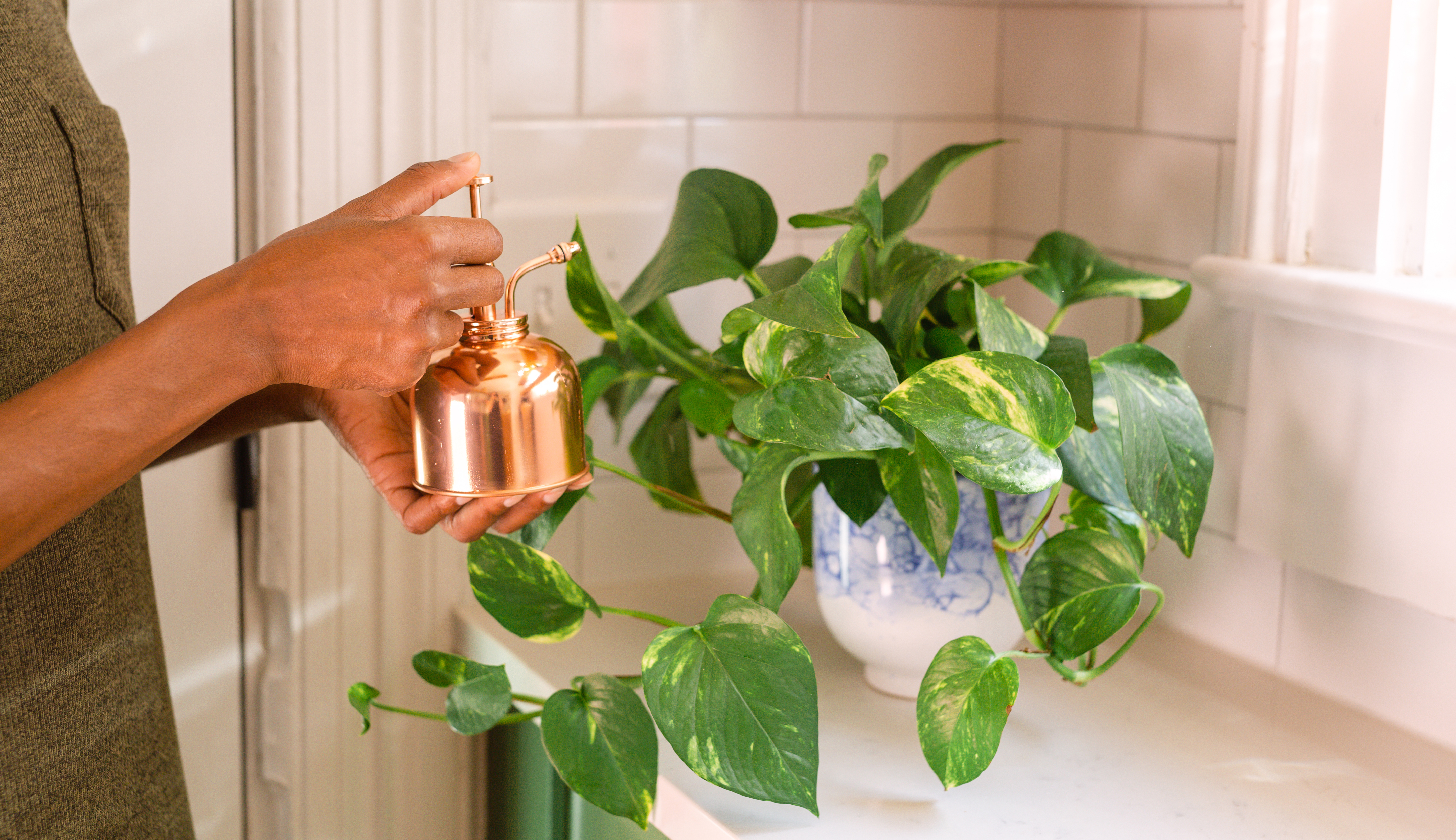 Hands with copper mister misting a pothos plant in a blue and white pot.