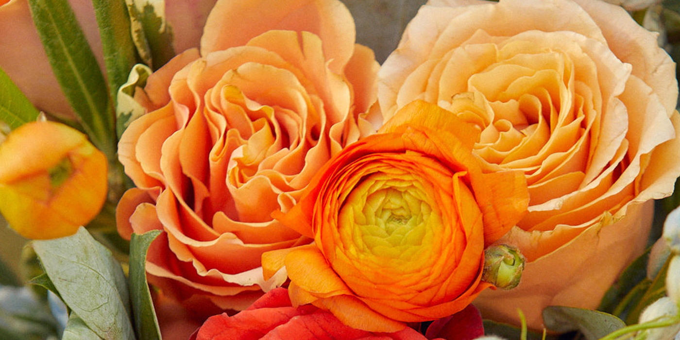 Ranunculus for Mother's Day