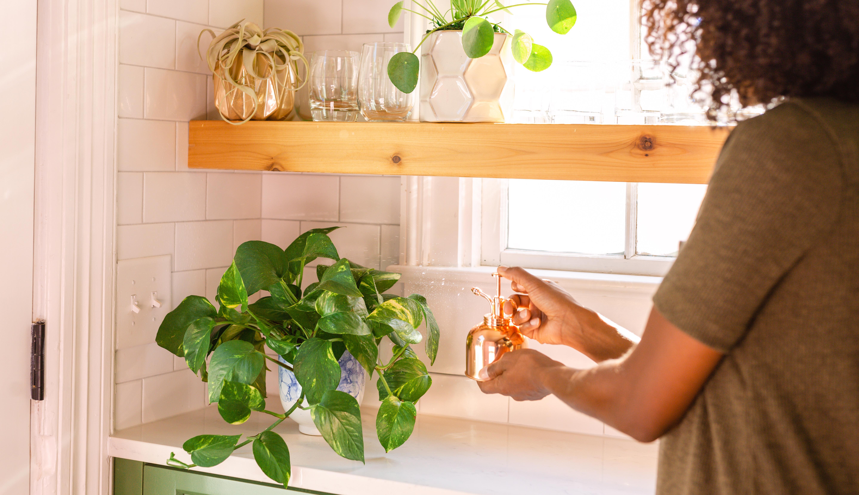 Hands misting a pothos plant