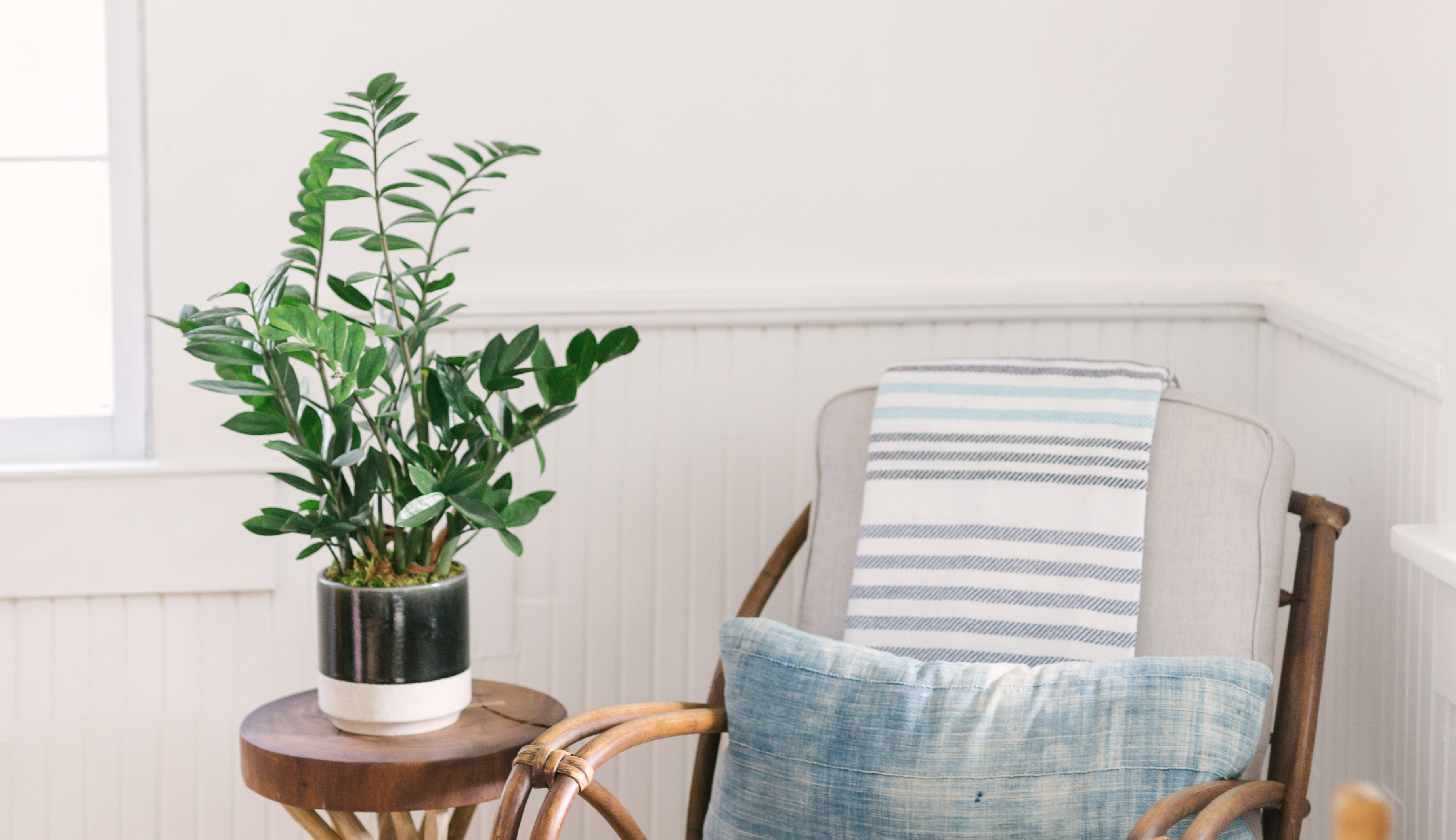 ZZ Plant on side table next to chair