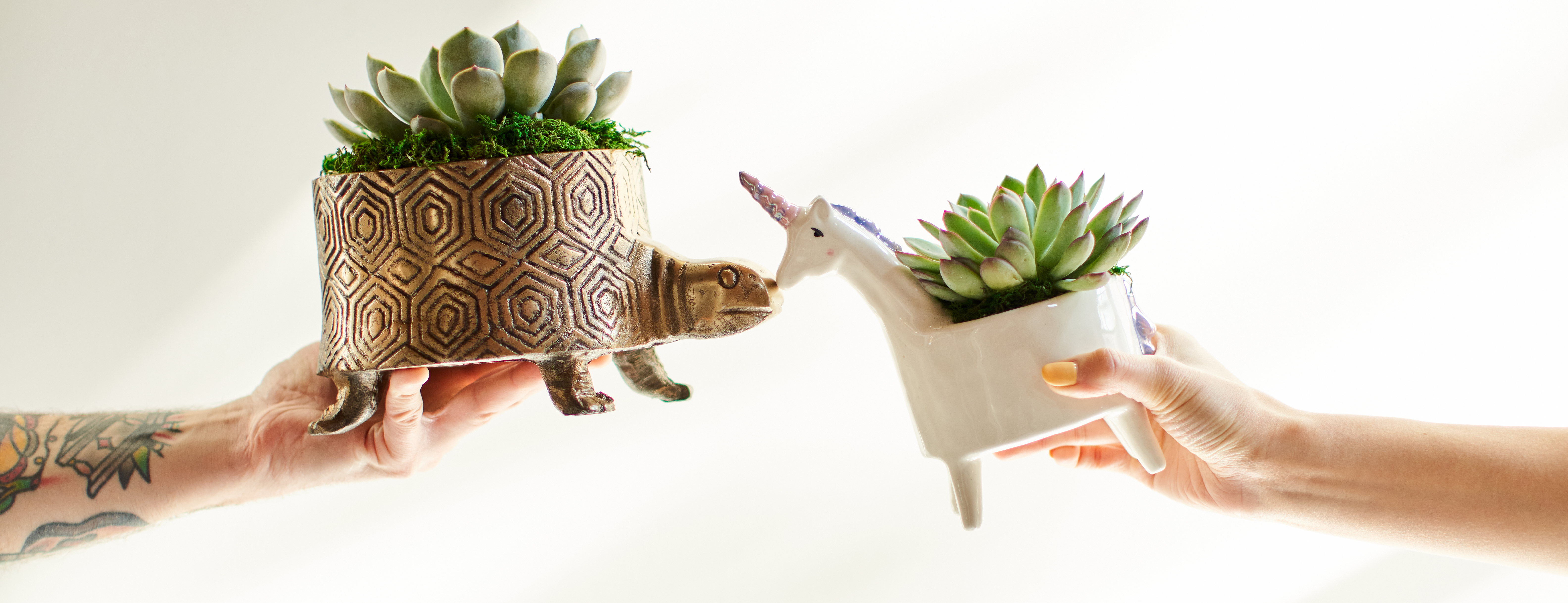 Hands holding two succulents in animal planters