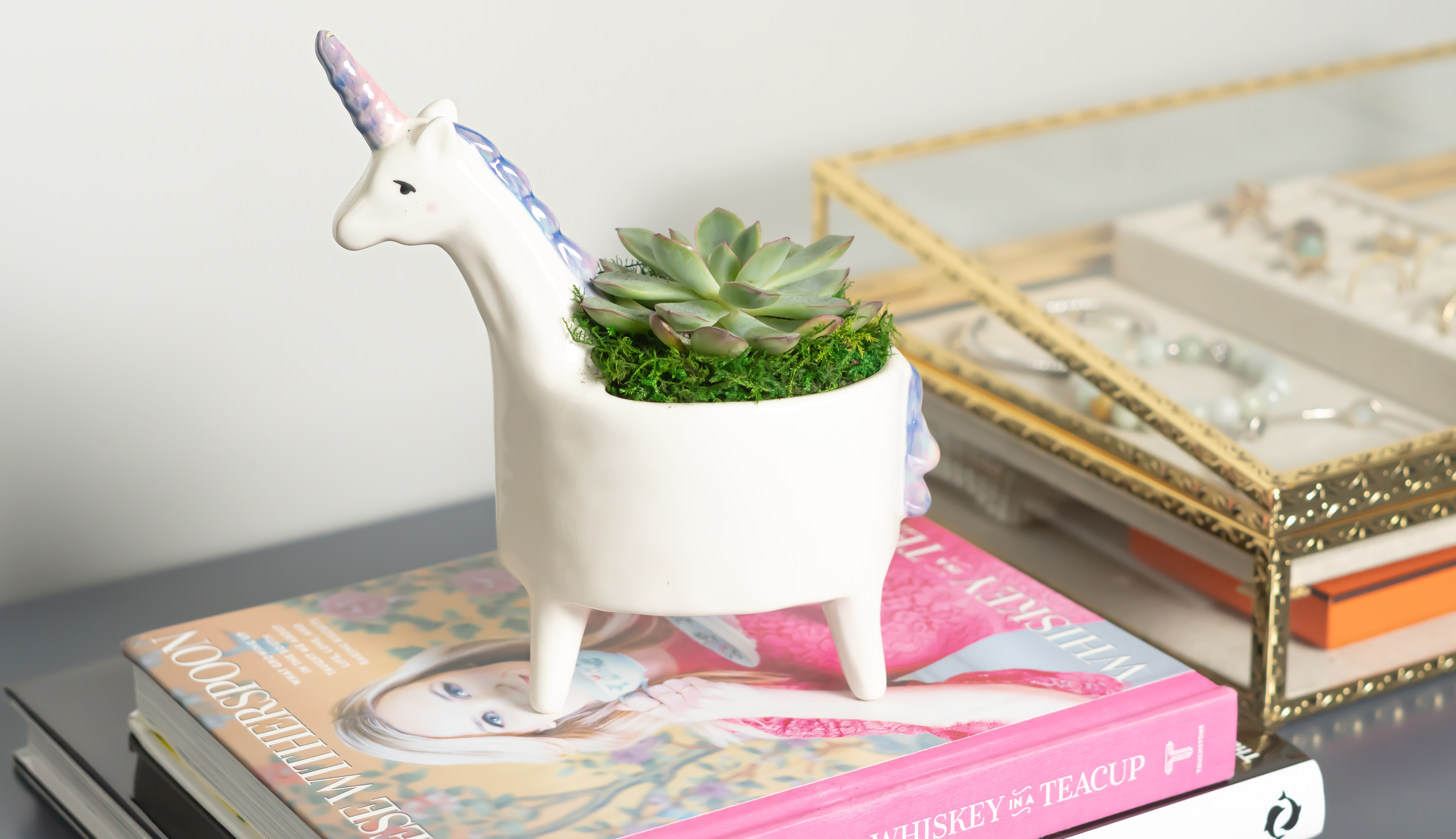 Succulent in a planter shaped like a unicorn