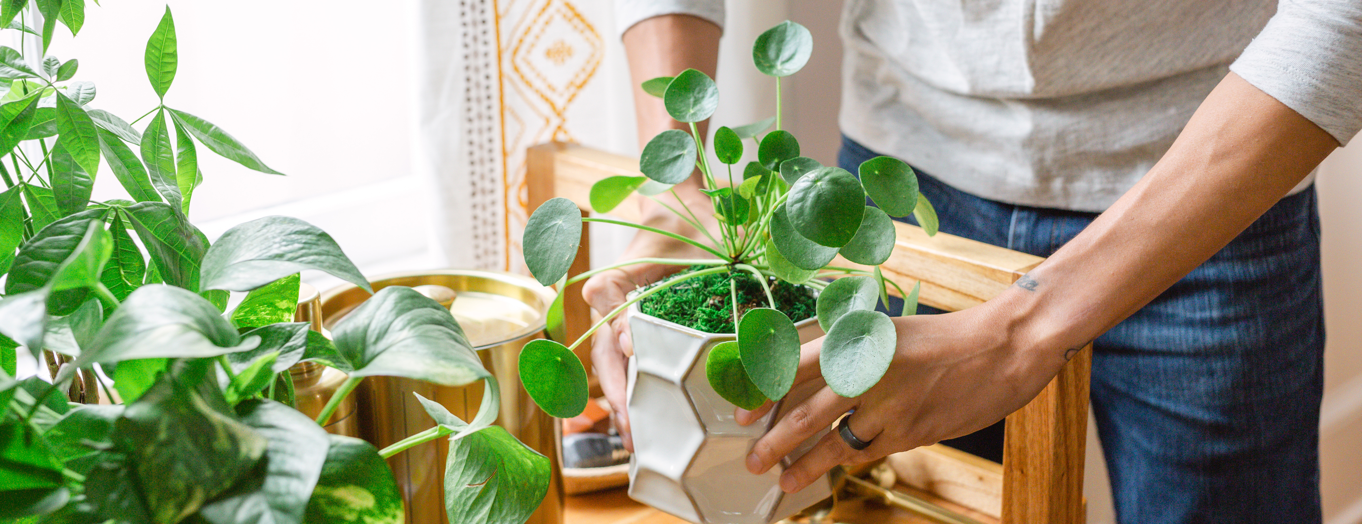 Hands surrounded by indoor plants, Chinese money plant and golden pothos plant