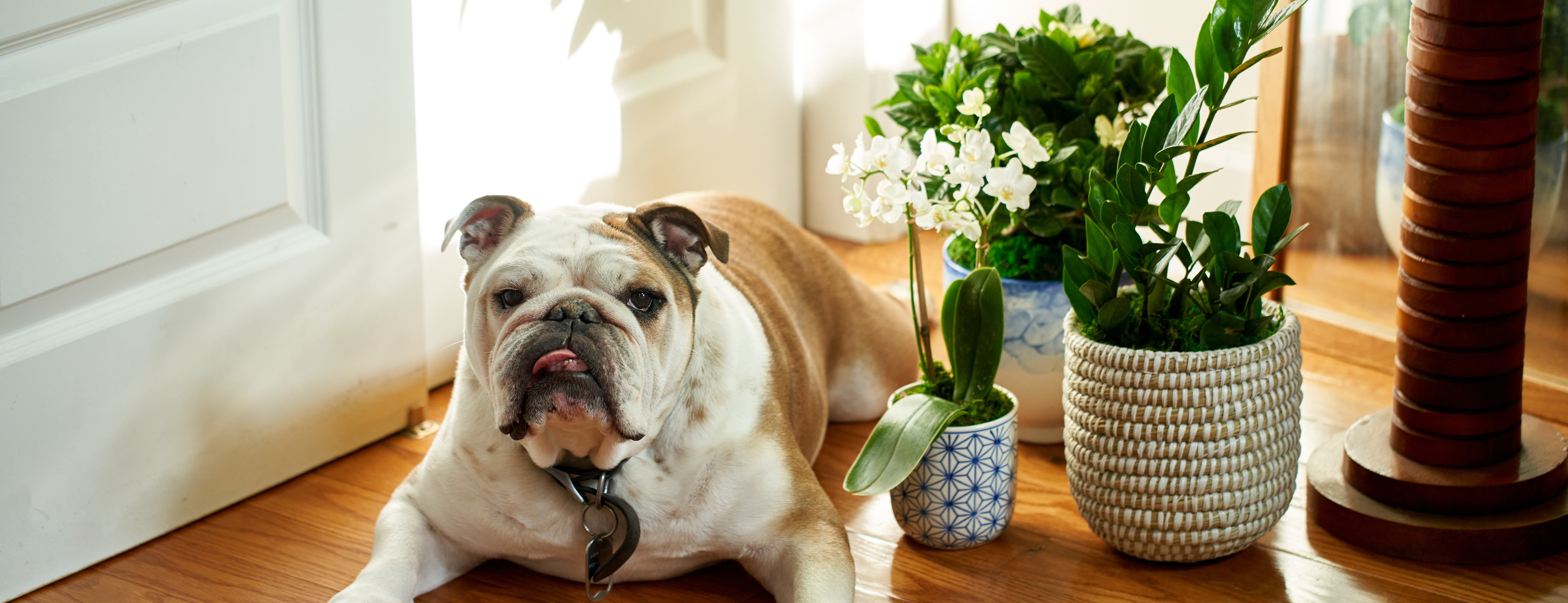 Dog laying on floor among various pet-friendly plants