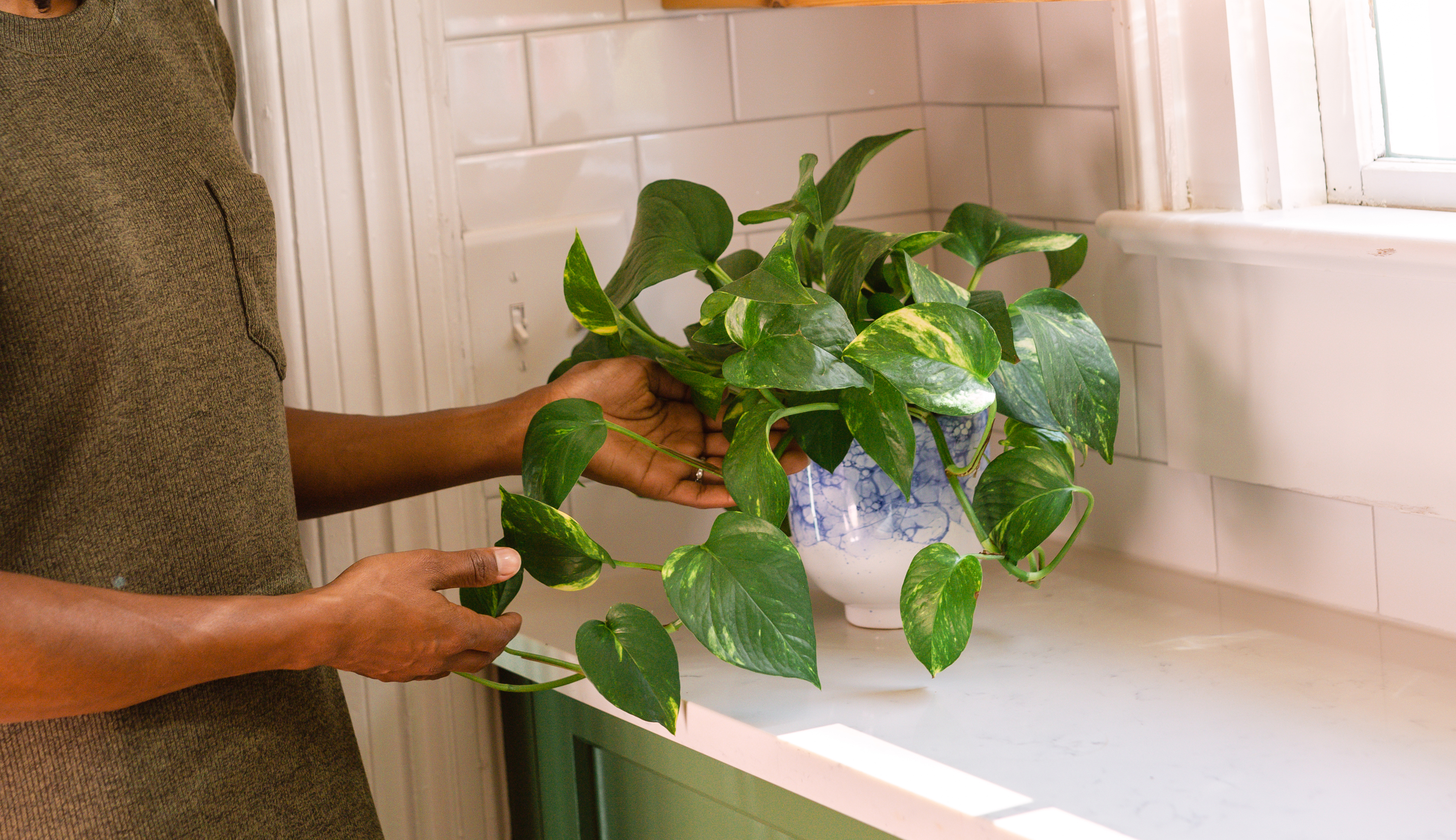 Woman holding leaves of a pothos plant