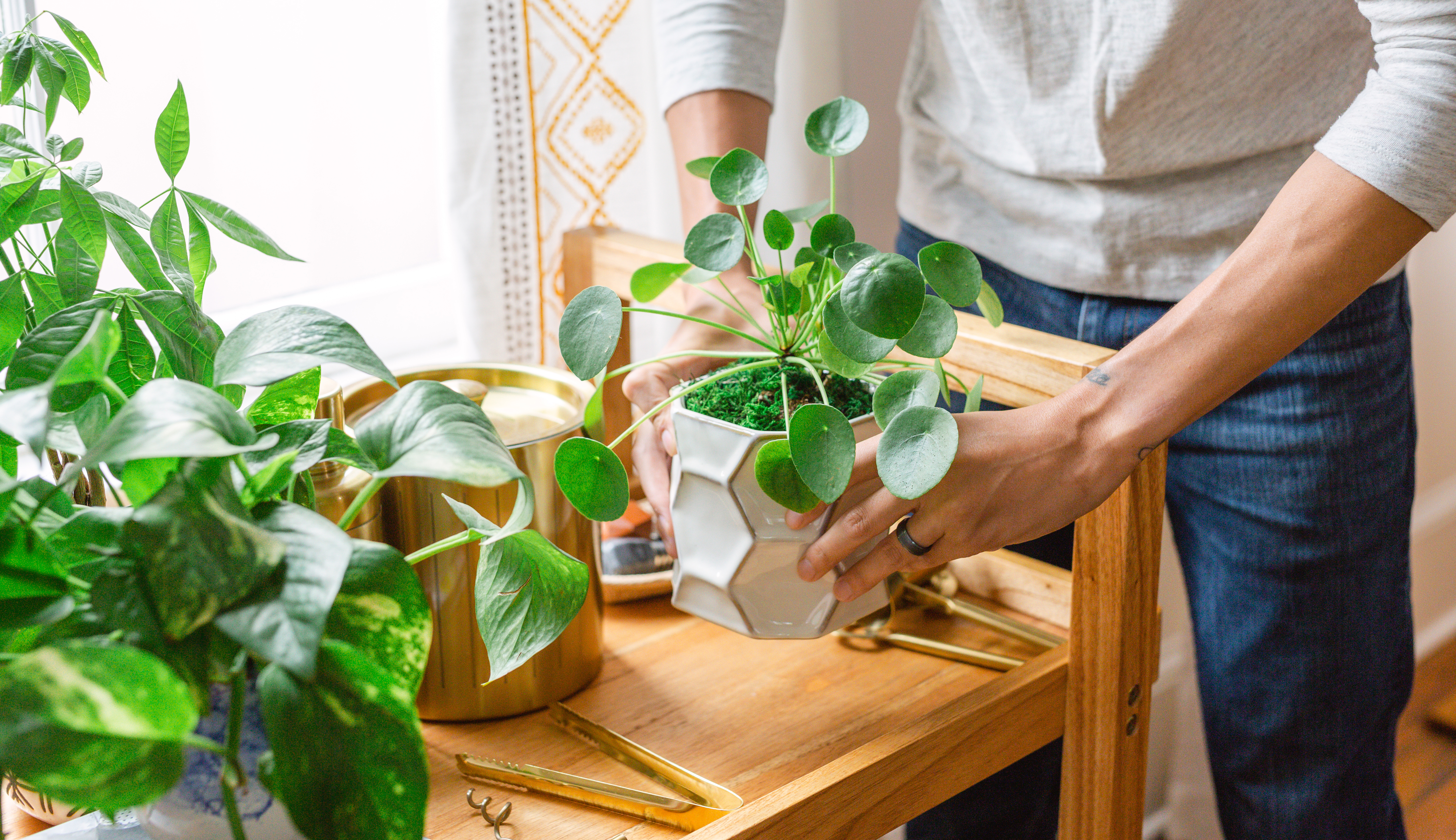 Plants on table including chinese money plant and pothos plant.