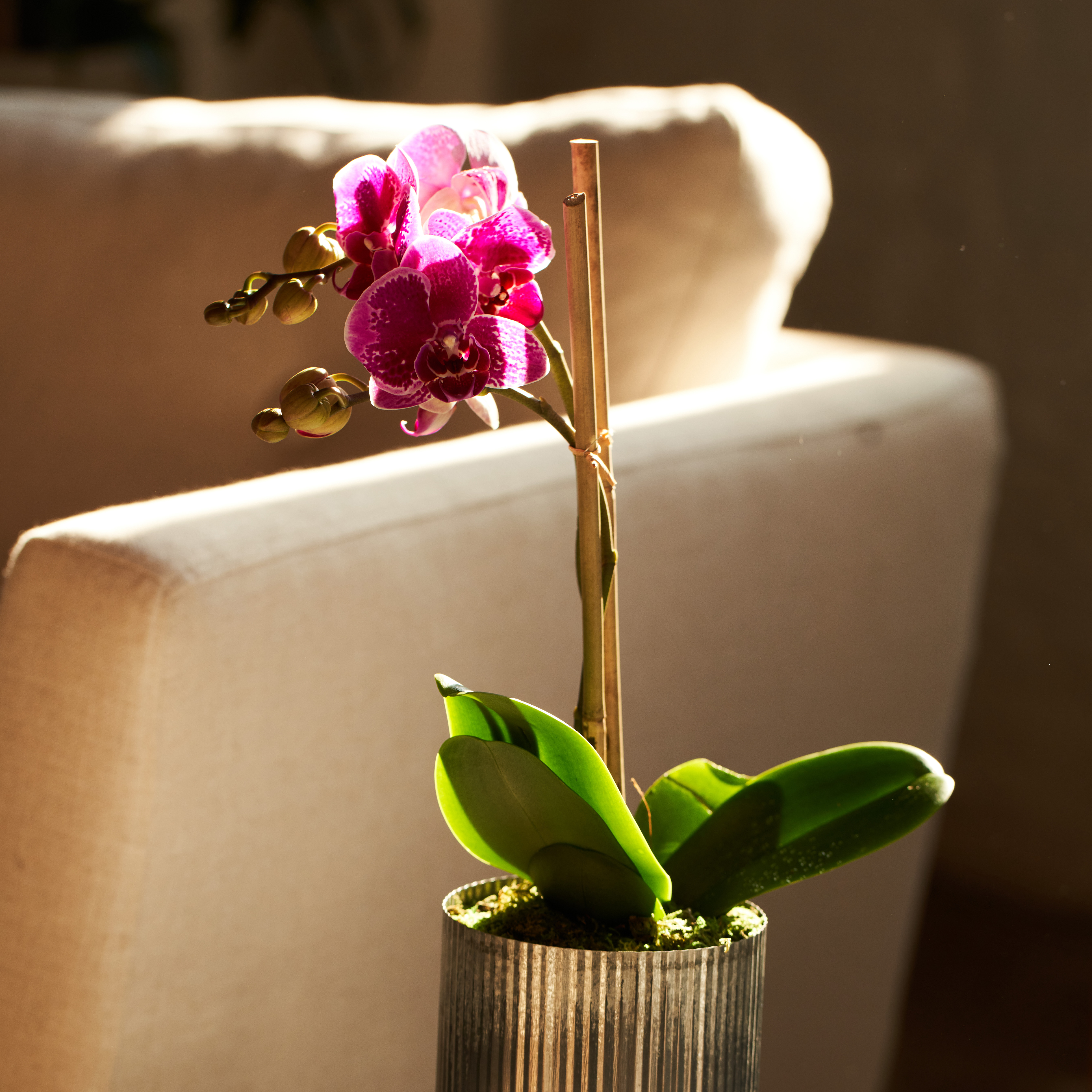 keep-orchid-alive