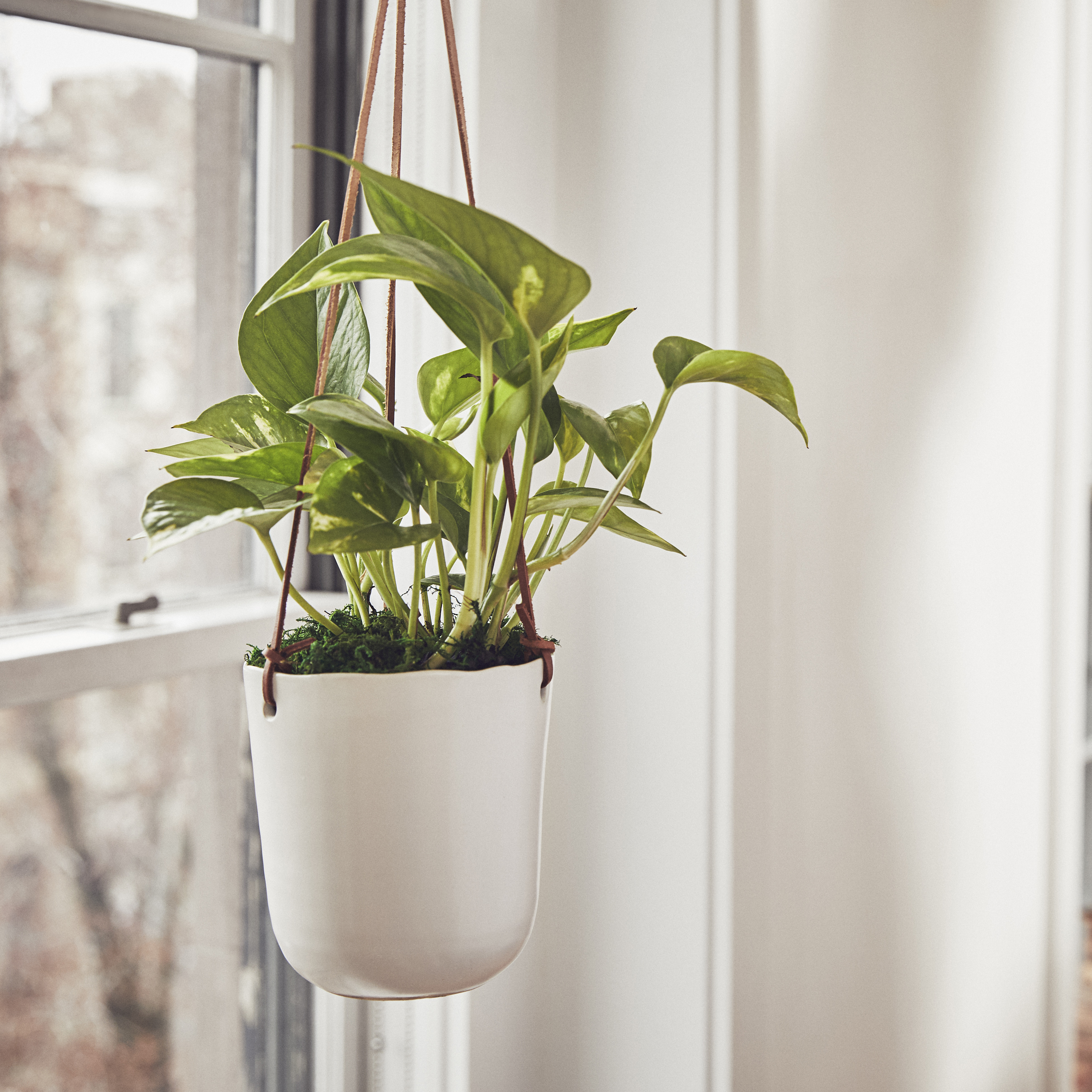 prepare-indoor-plants-fall
