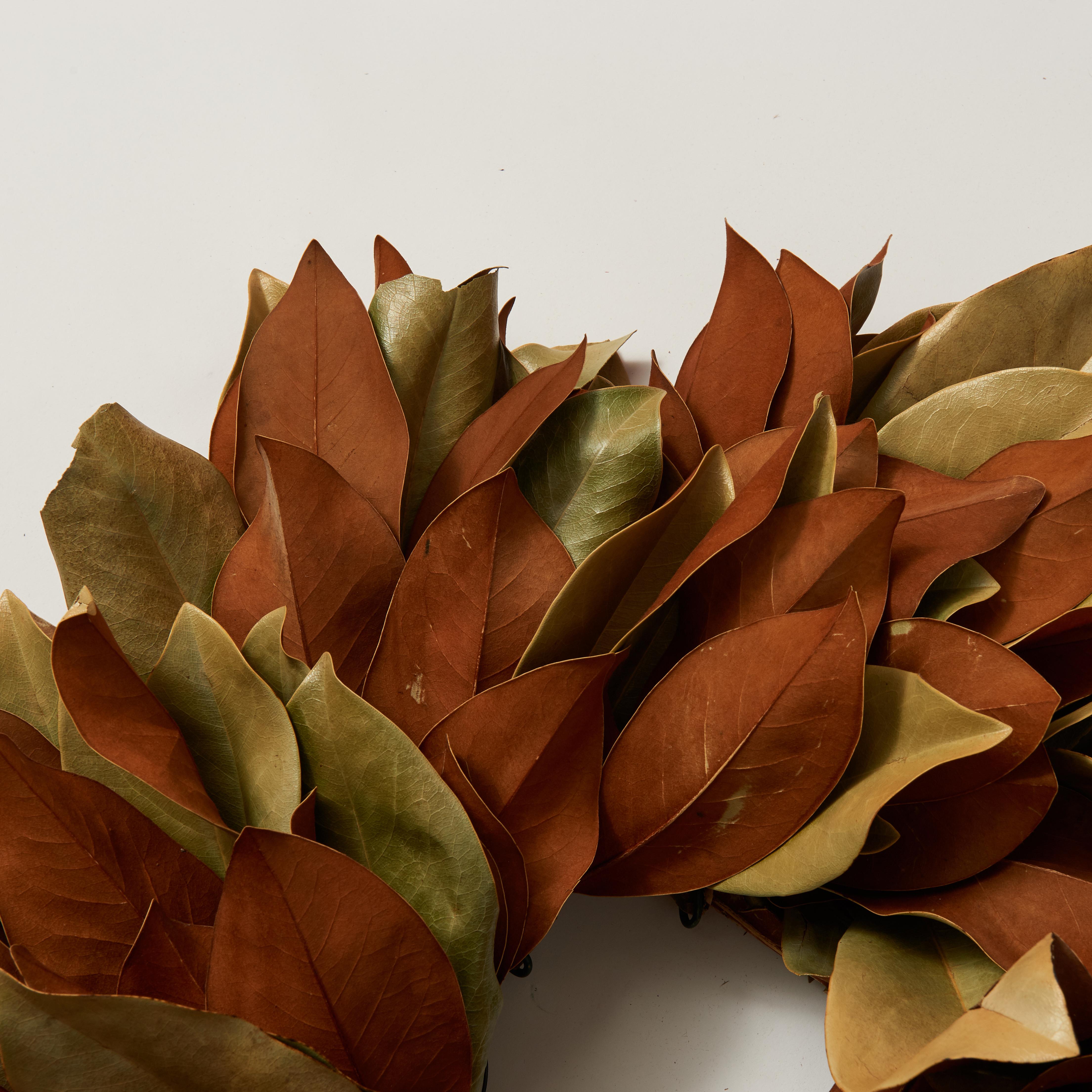 magnolia-guide