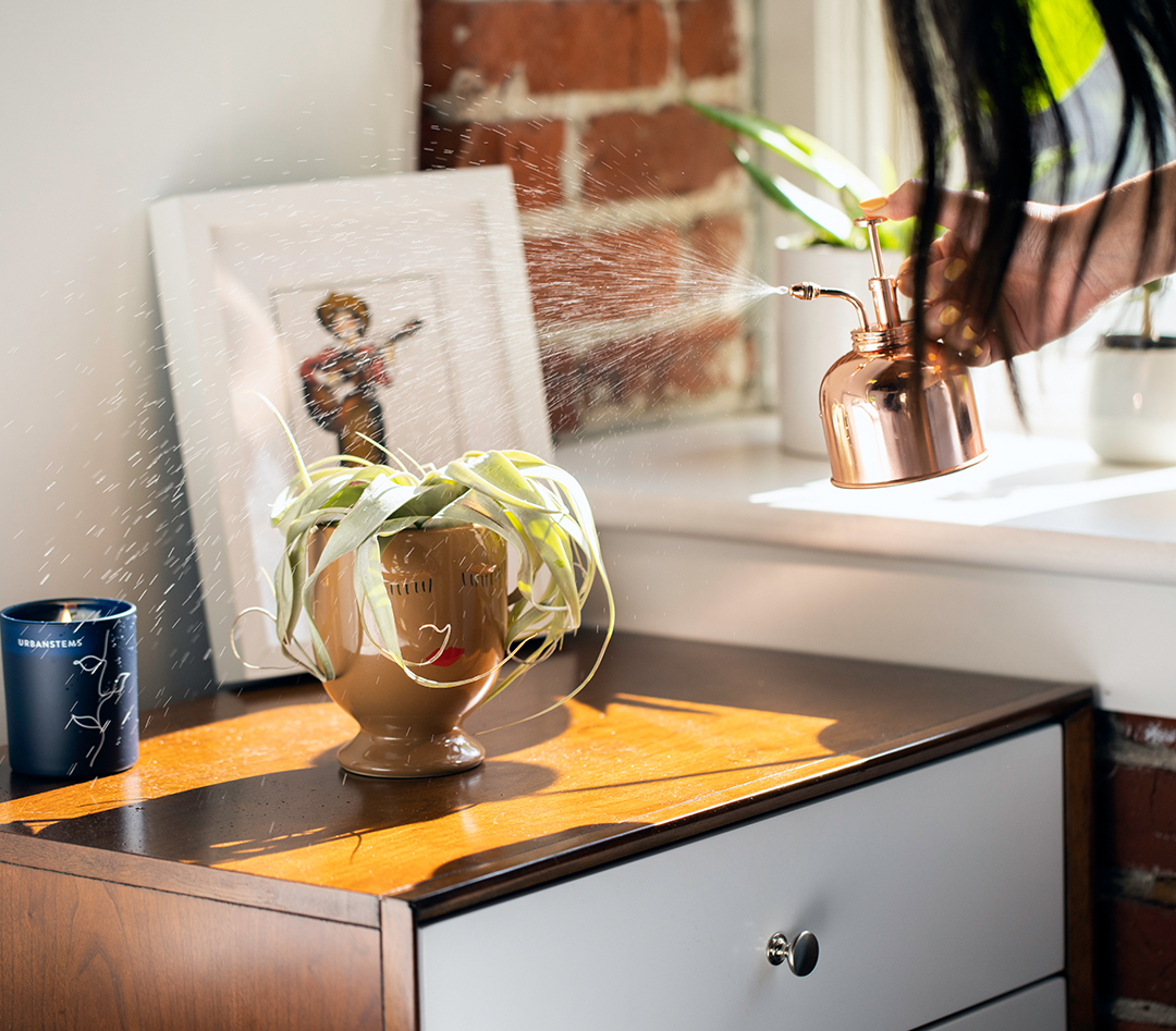 best-plants-home
